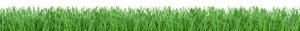Perfect Yard Grass